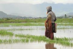 Fischer in überschwemmtem paddyfield Lizenzfreie Stockbilder
