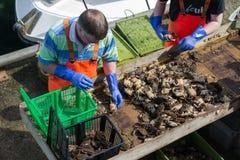 Fischer auf dem Pier Lizenzfreie Stockfotos
