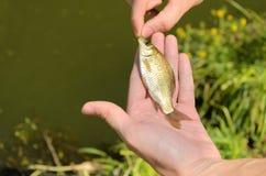 Fischer, der einen kleinen Fisch hält Lizenzfreie Stockbilder