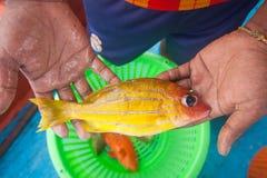 Fischer, der an Hand gelbe Fische auf dem Fischerboot hält Stockbilder