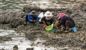 Fischer, der Herzmuschel nahe dem Meer findet lizenzfreies stockbild