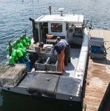 Fischer, der Live-Maine-Hummer sortiert und verkauft Stockbild