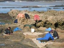 Fischer, die Meeresfrüchte an der Küste, Marokko trocknen Lizenzfreie Stockbilder