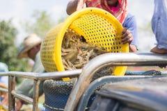 Fischer gießen die Garnele aus dem Korb heraus in Eimer Lizenzfreies Stockbild