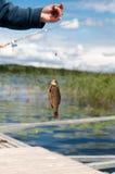 Fischer hält einen Fisch Stockbilder