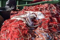 Fischer im Hafen stockbilder