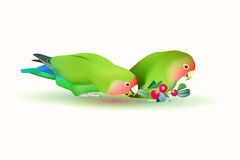 Fischer's lovebirds. (pair of parrots Royalty Free Stock Photography