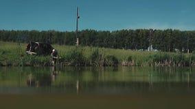 Fischer sitzt auf dem Ufer des Sees stock footage