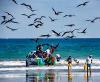 Fischer tragen die Behälter von Fischen zu den Käufern, gejagt durch das Vogelschauen lizenzfreie stockbilder