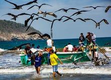 Fischer tragen die Behälter von Fischen zu den Käufern, gejagt durch das Vogelschauen lizenzfreies stockfoto