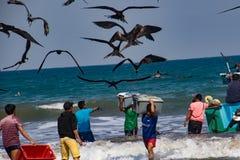Fischer tragen die Behälter von Fischen zu den Käufern, gejagt durch das Vogelschauen stockfoto