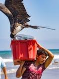 Fischer tragen die Behälter von Fischen zu den Käufern, gejagt durch das Vogelschauen lizenzfreie stockfotografie