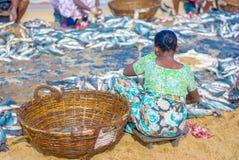 Fischer und Fischereitätigkeiten in Sri Lanka Lizenzfreies Stockbild