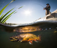 Fischer und Forelle lizenzfreies stockfoto