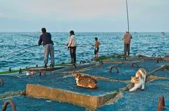 Fischer und Katzen Stockfotografie
