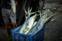 Fischer wiegt gefangene Thunfische für Verkauf am Fischmarkt Stockbild