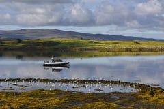Fischerboot umgeben durch Vögel auf Insel von Mull, Hochländer, Schottland, Vereinigtes Königreich lizenzfreie stockbilder