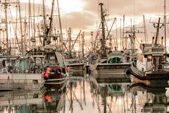 Fischerboote am Jachthafen Stockfoto