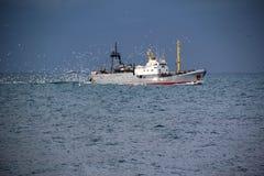 Fischerboote mit ihrem Fang Stockbilder