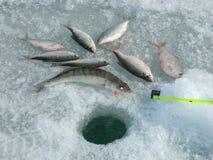 Fischerei Lizenzfreie Stockbilder