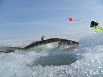 Fischerei Lizenzfreies Stockfoto