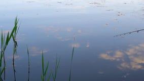 Fischerei auf dem See stock video