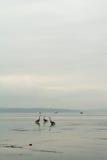 Fischerei auf dem Ton Lizenzfreie Stockfotos