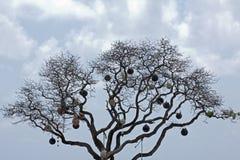 Fischerei des Herbewegungsbaums Lizenzfreies Stockfoto