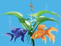 Fischerei im Aquarium Stockfotografie