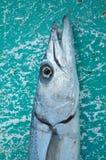 Fischerei in Mahahual Stockbilder