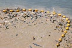 Fischerei mit Netzen Lizenzfreies Stockbild
