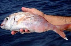 Fischerei-Reise Stockfoto