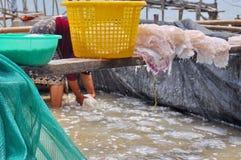 Fischerei trocken für Quallen Lizenzfreie Stockfotos