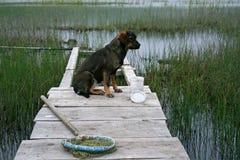 Fischerei und ein Hund Stockfotografie