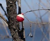 Fischereiausrüstung, welche die Bäume verunreinigt lizenzfreies stockfoto