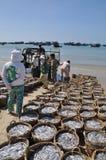 Fischereien sind auf dem Strand in vielen Körben, die auf das Laden auf den LKW zur Verarbeitungsanlage warten Stockbild