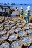 Fischereien sind auf dem Strand in vielen Körben, die auf das Laden auf den LKW zur Verarbeitungsanlage warten Stockfotografie
