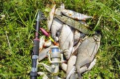 Fischereifang. Stockbild