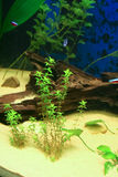 fisches аквариума некоторые тропические Стоковые Фото