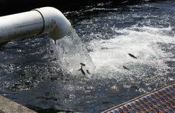 Fischfall vom Wasser, das aus ein Rohr herauskommt stockfoto