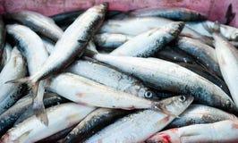 Fischfang Stockfotos