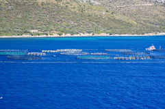 Fischfarm 2 Lizenzfreie Stockbilder