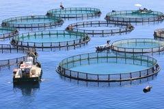 Fischfarm Lizenzfreies Stockbild