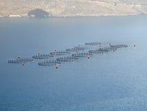 Fischfarm Stockfoto