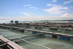 Fischfarm lizenzfreie stockfotografie