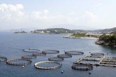 Fischfarm stockbilder