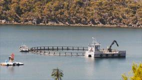 Fischfarm stock footage
