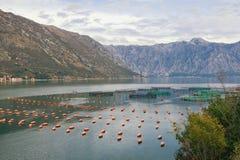 Fischfarm in Adria Montenegro, Bucht von Kotor lizenzfreie stockbilder