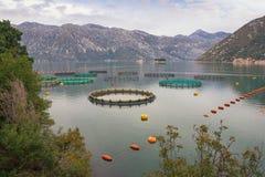 Fischfarm in Adria Montenegro, schöne Ansicht der Bucht von Kotor am bewölkten Herbsttag lizenzfreie stockbilder