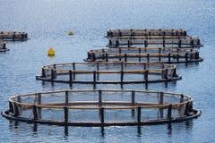 Fischfarm in der Bucht von Kotor Lizenzfreie Stockbilder